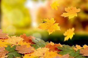 Вітаємо кліриків єпархії, що народилися в листопаді!